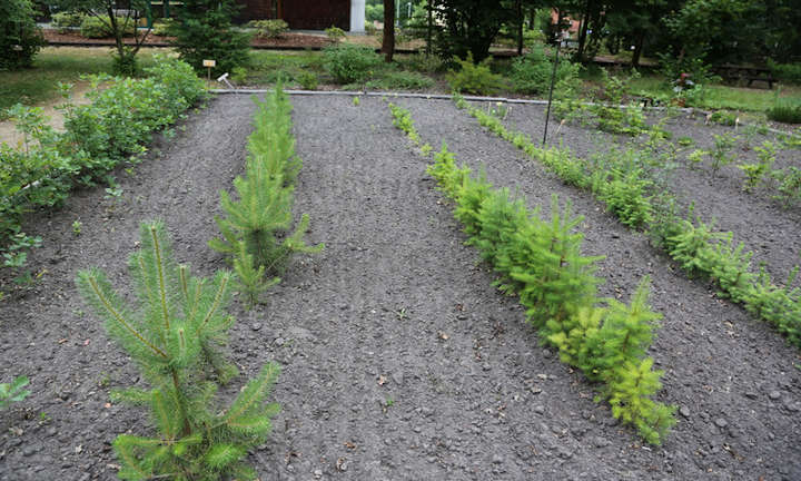 Forstpflanzenzüchtung langfristig unterstützen