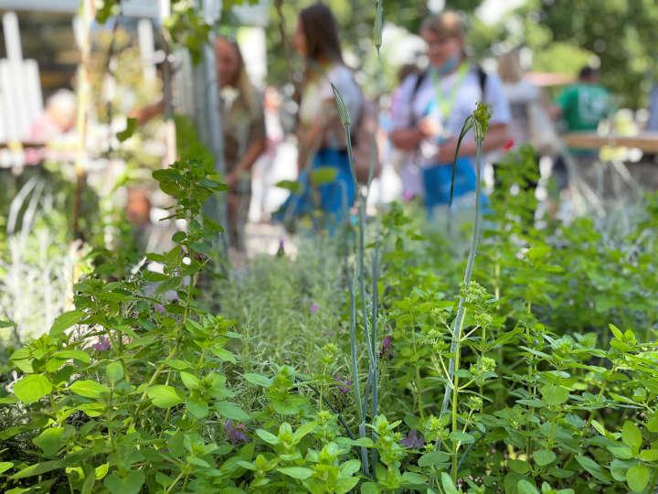 Im Juli in den FGL-Themengärten auf der Bundesgartenschau