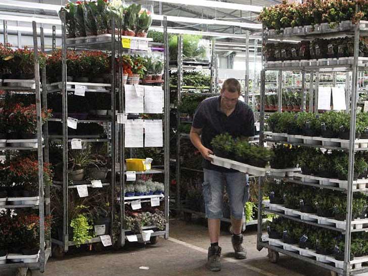 Pflanzenhändler