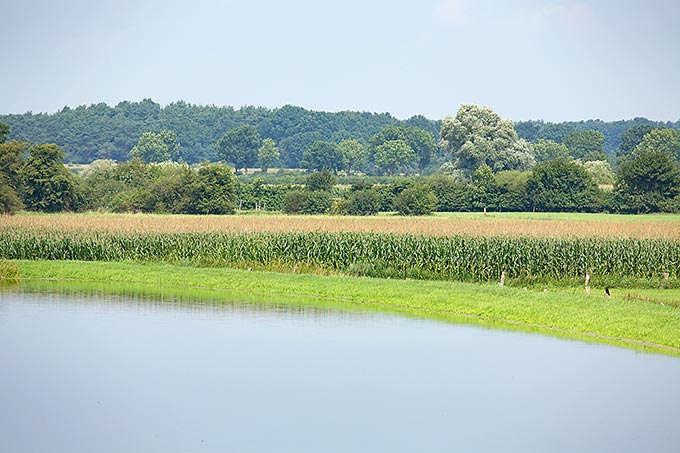 Kleine Maßnahme, große Wirkung: Naturnahe Gewässerrandstreifen retten Insekten