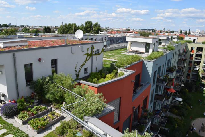 Fokus auf grüne Dächer am 6. Juni 2021: World Green Roof Day 2021