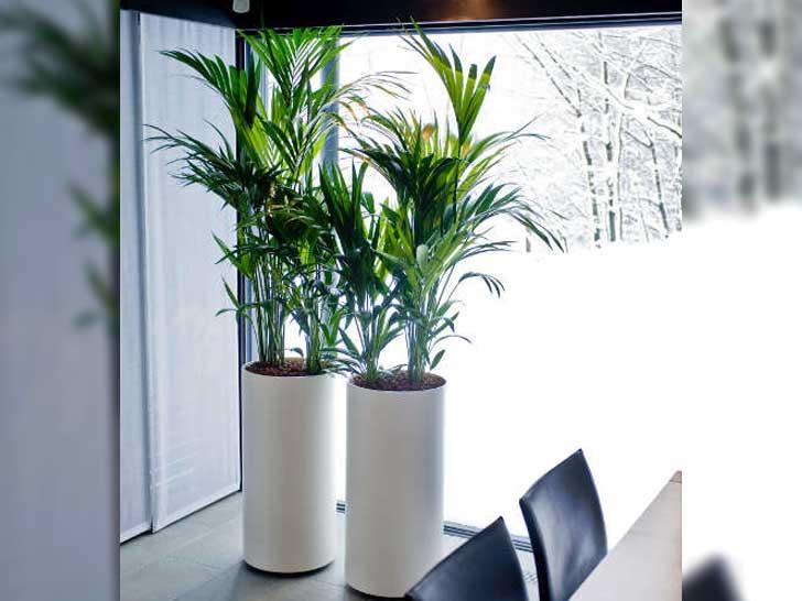 Pflanzen Fr Dunkle Ecken. Licht Fr Die Wohnzimmer Modern Einrichtung ...