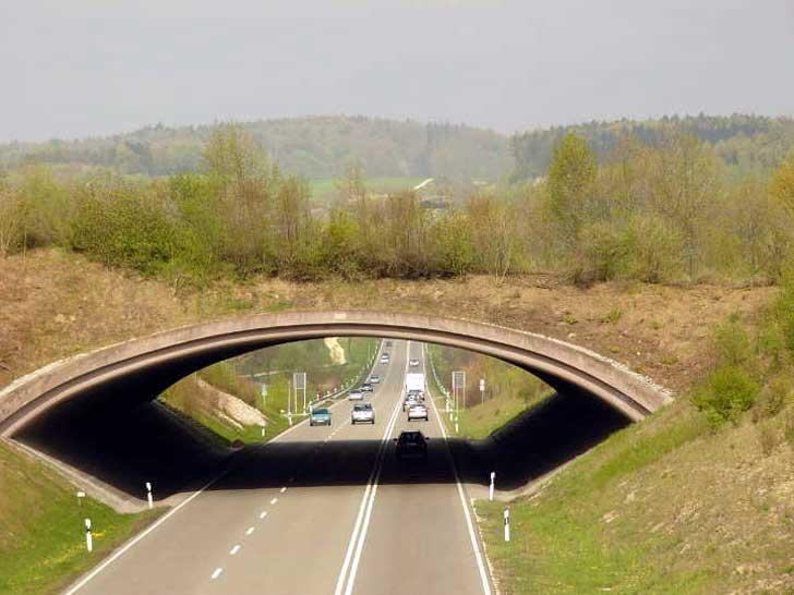 Grünbrücke B31