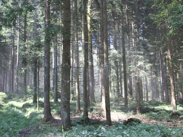 Waldkalkung aus der Luft