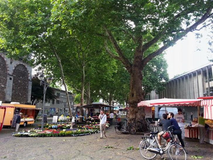 Nährstoffversorgung Bäume