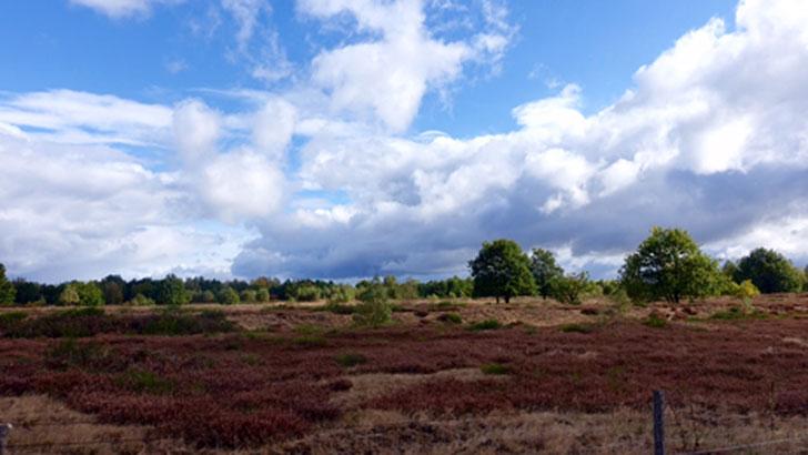 Wilde Heide