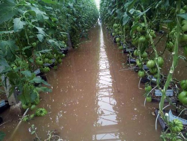 Hochwasser Gemüsebaubetrieb