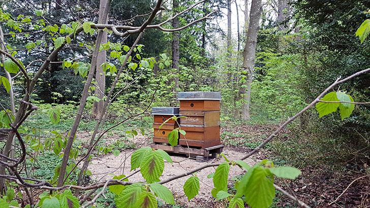 Honigprojekt
