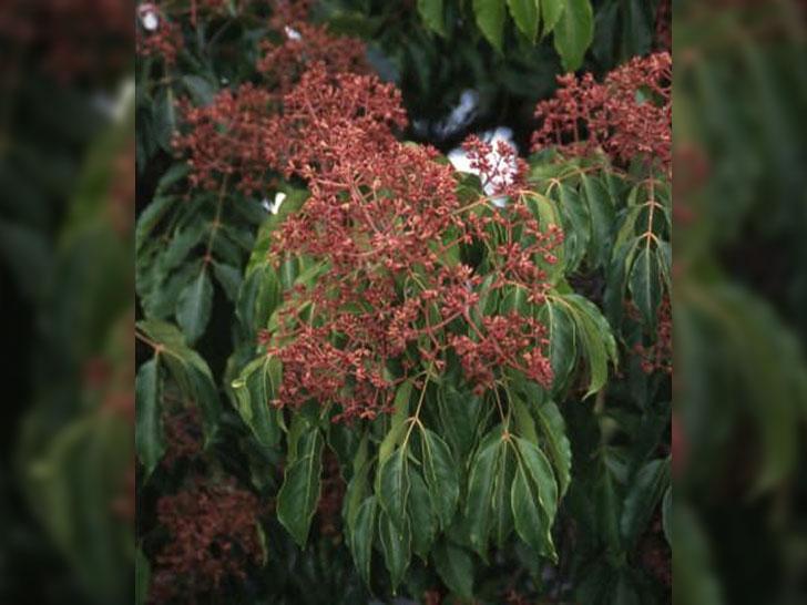Blütengehölze