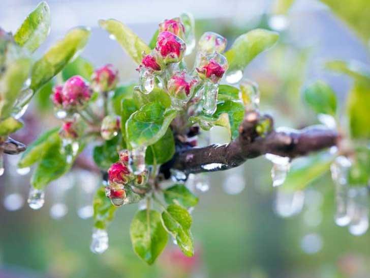 Frühfrost