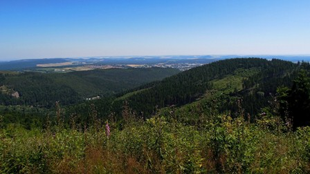 Ilmenaus Wälder