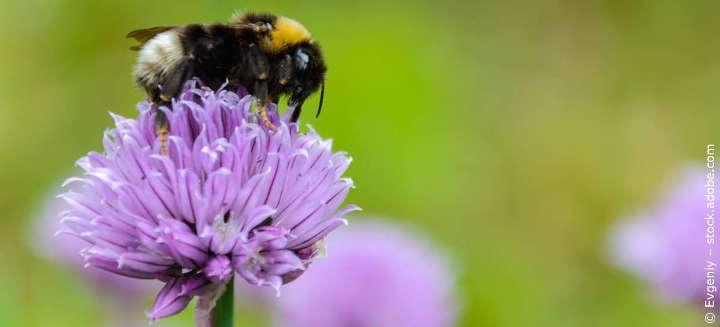 Wirksamen Insektenschutz im Dialog voranbringen