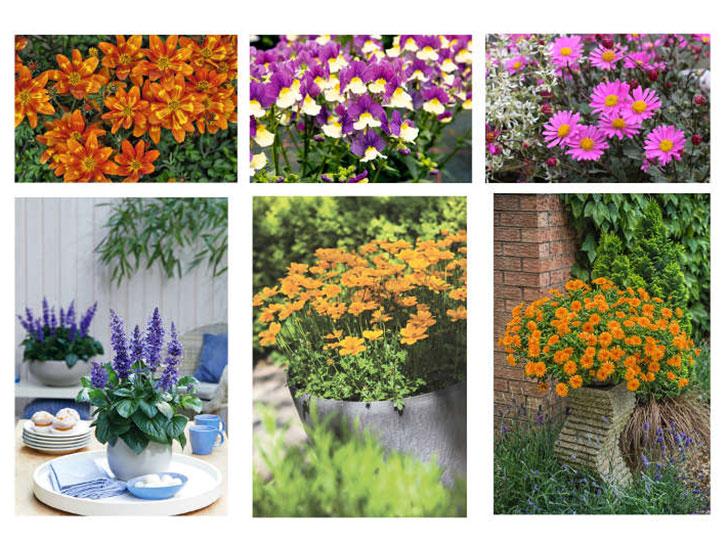 Pflanzen des Jahres