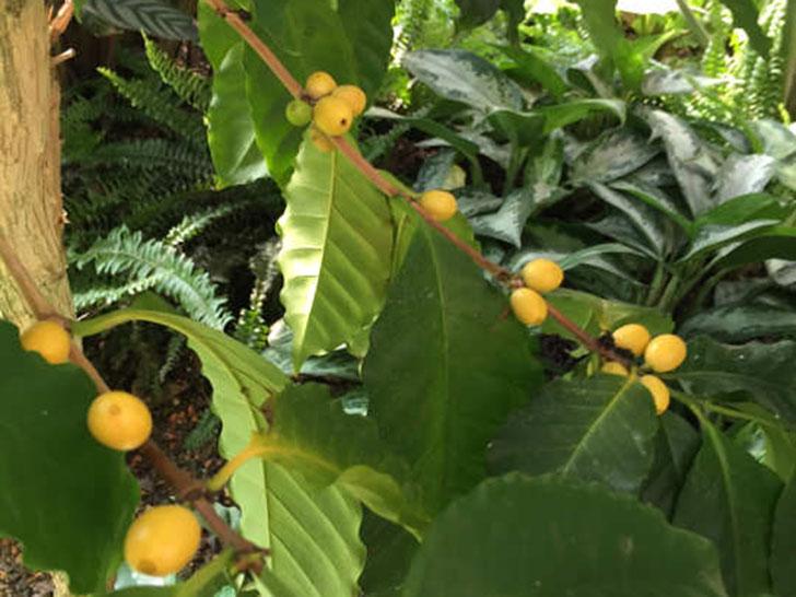 Ernte im Botanischen Garten