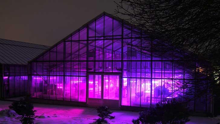 Gewächshaus mit LED