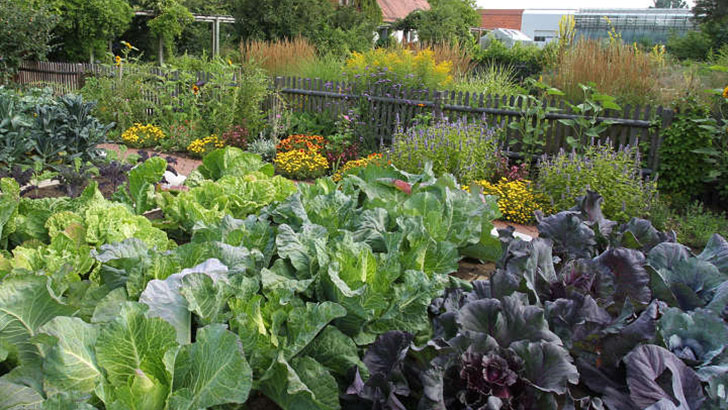 Gemüsebauversuchsbetrieb