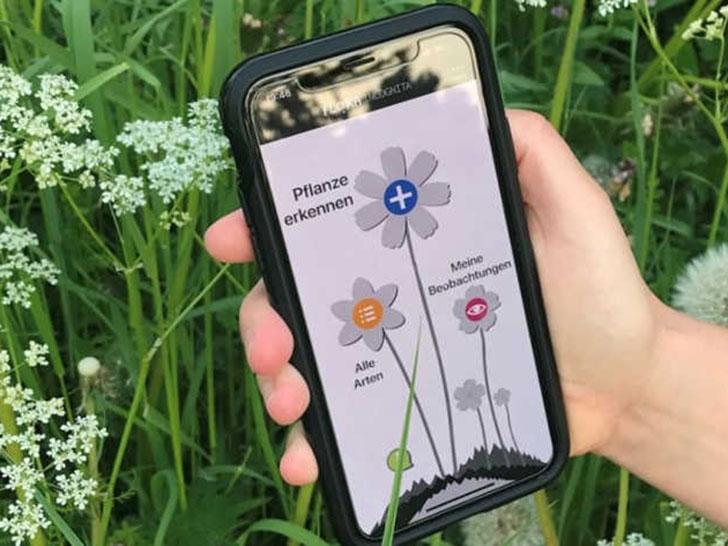 Pflanzenbestimmung per Smartphone