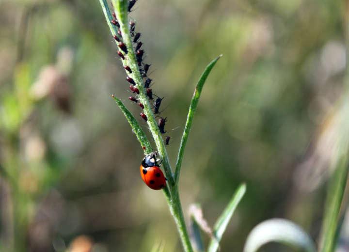 Landwirtschaft: Wenn den Schädlingen Unheil blüht