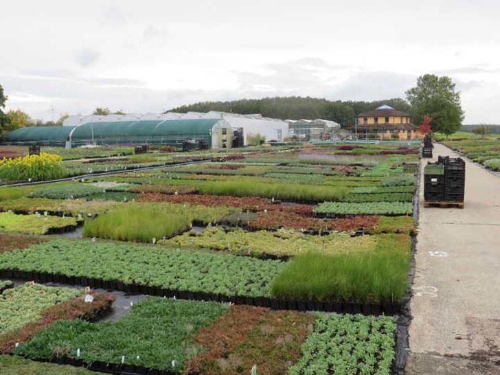 Mutterpflanzenquartier