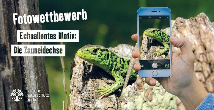 "Fotowettbewerb ""Reptil im Fokus"""