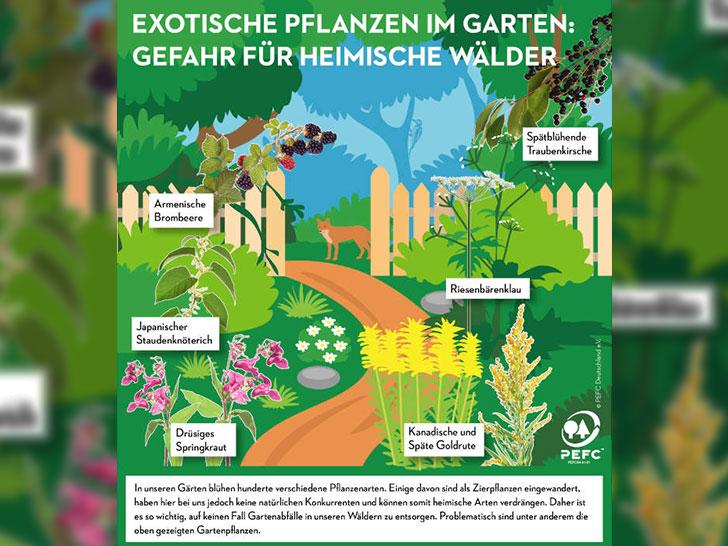 Pflanzen im Garten