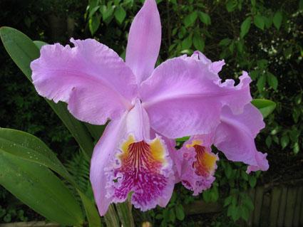 Orchideen-Messe