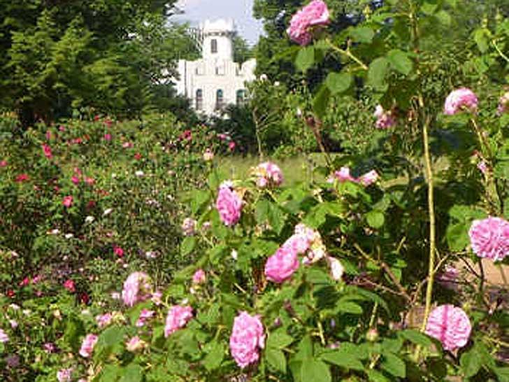 Rosengarten auf der Pfaueninsel