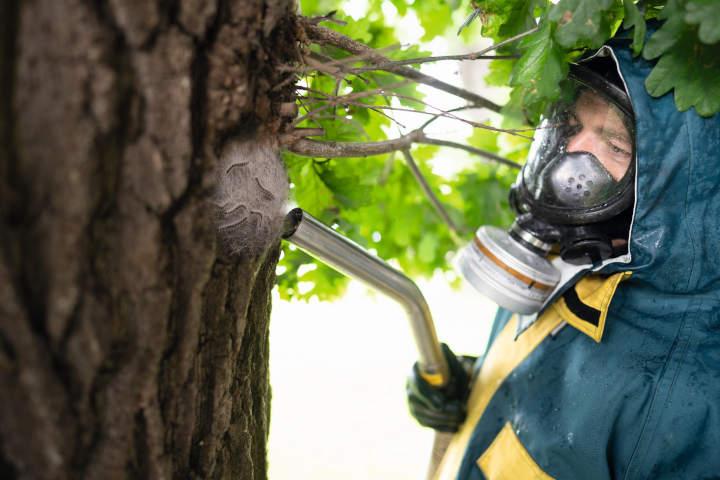Schädlingsbekämpfung auf die saubere und umweltgerechte Art