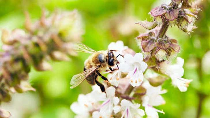 Bienen in Gärten
