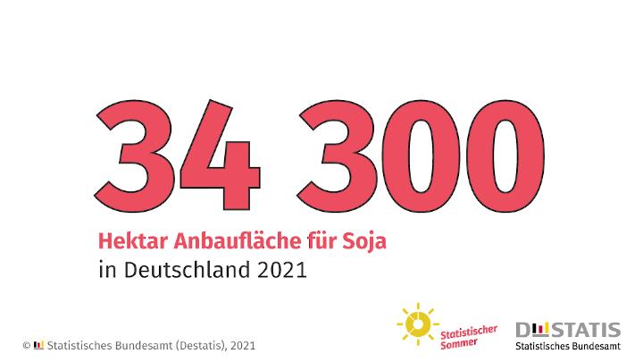 Sojaanbauflächen in Deutschland binnen fünf Jahren mehr als verdoppelt