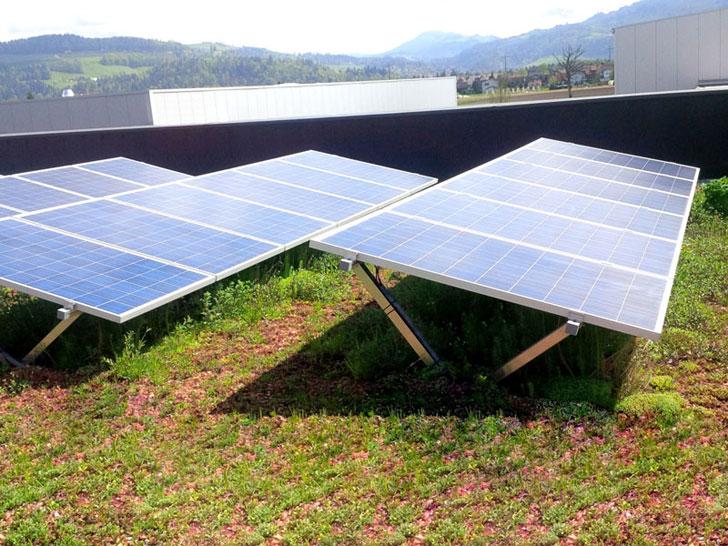 SolarGrünDach Sun Root 15