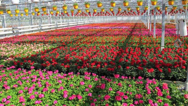 Gartenbau Salzwedel