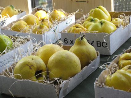 Seltene Obstsorten