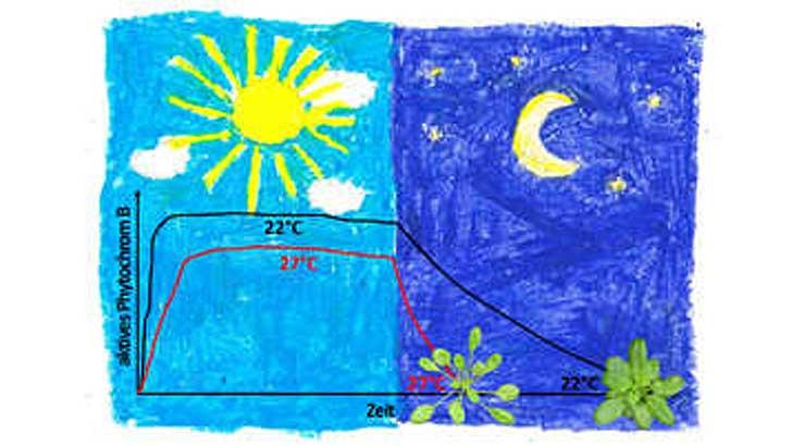Licht und Temperatur