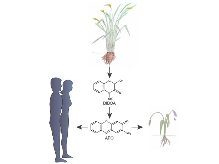 pflanzliche Giftstoffe