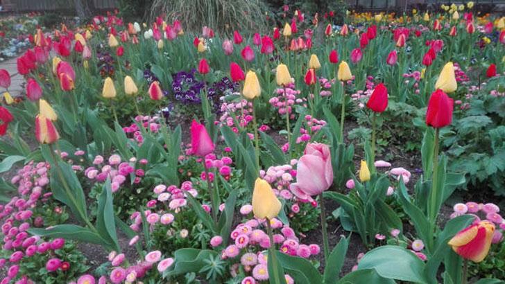 Botanischen Garten Karlsruhe