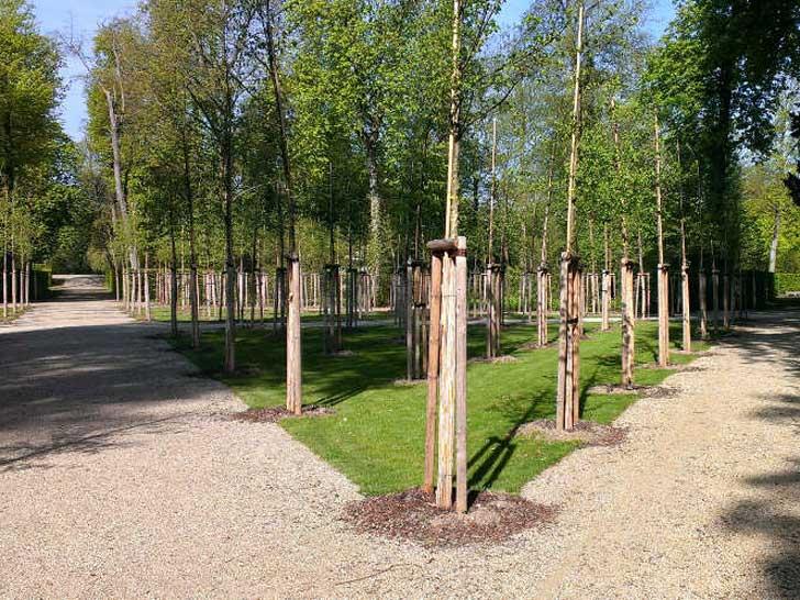 Ulmen im Schlossgarten