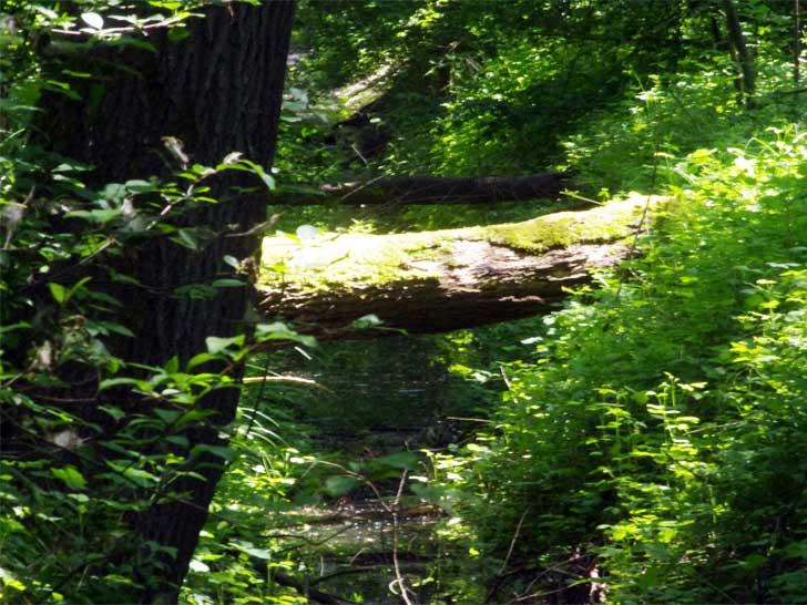 Moos bewachsener Baumstamm
