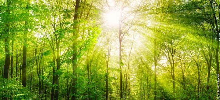 Bundesumweltministerium will Erhalt von artenreichen und klimastabilen Wäldern honorieren