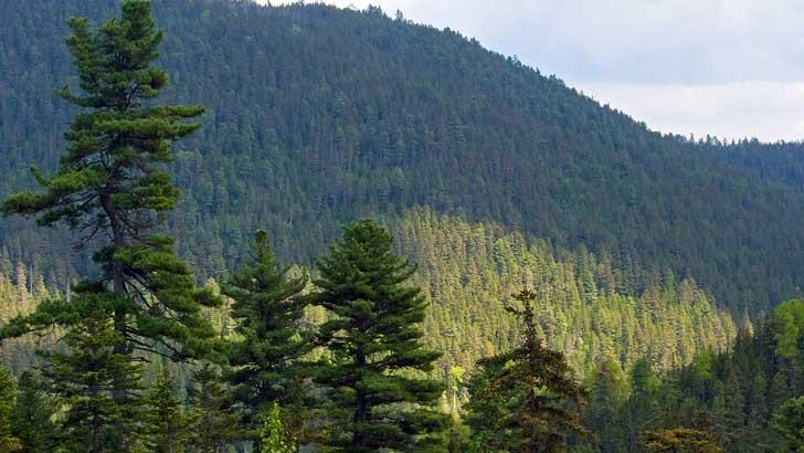 Waldschutzprojekte in Russland