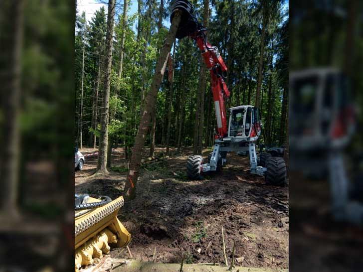 Waldmanagement