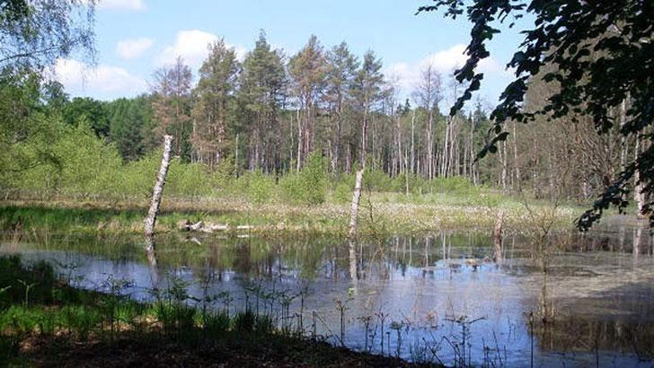 Waldnaturschutz