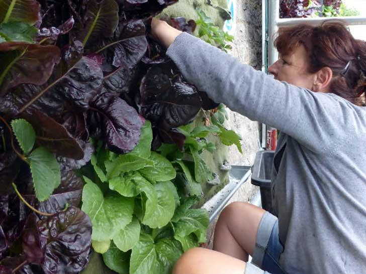 Salat von der Fassade