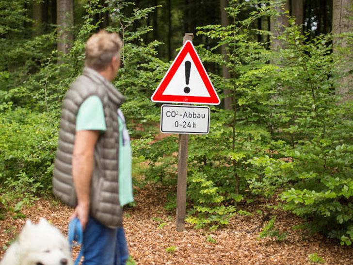 Stadtwald der Stadt Warstein