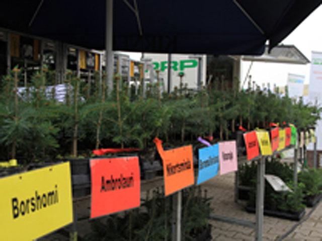 Weihnachtsbaumbörse