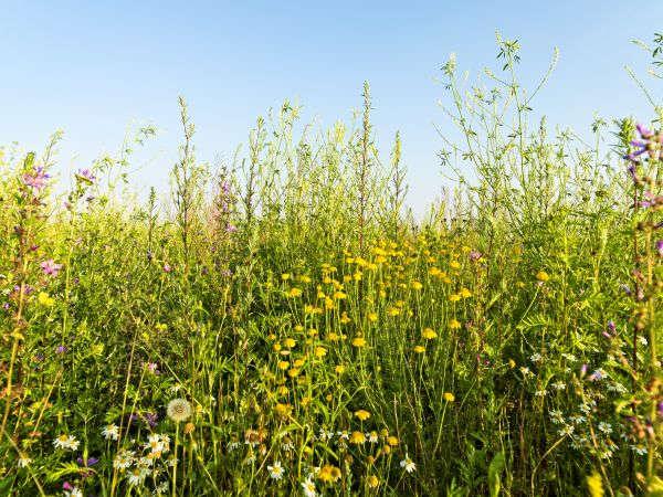 Niedersachsen fördert Biogas-Wildpflanzen mit 500 EUR pro Hektar