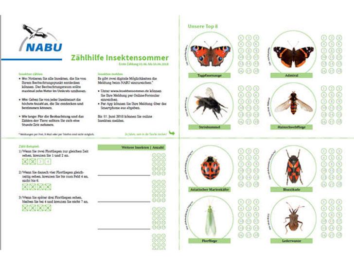 Zählhilfe Insekten